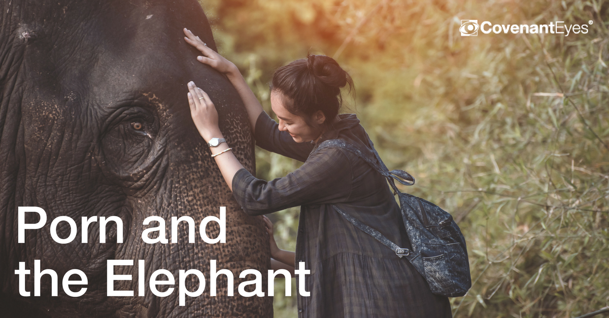 Porn and the Elephant
